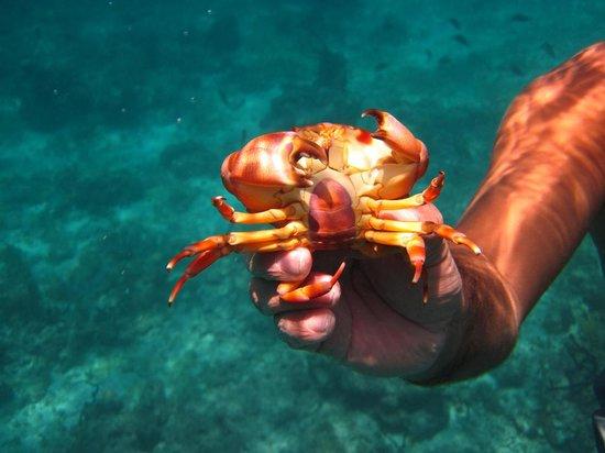 Dressel Divers: Crab