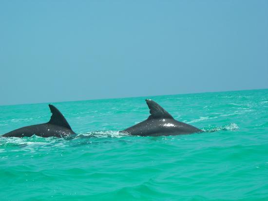 Tulum, Mexico: delfini a Xian Can
