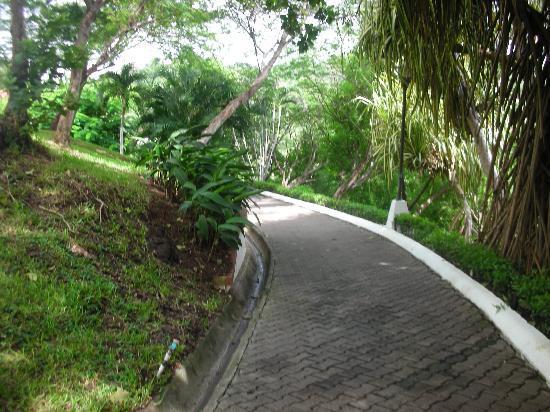 Villas Sol Hotel & Beach Resort: En armonia con la naturaleza mientras hacemos recorridos por el hotel!!! :)