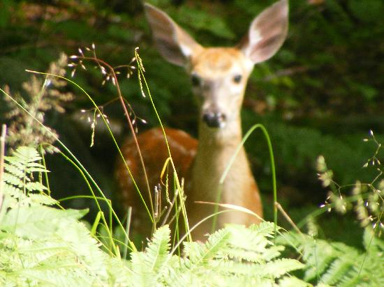 Nobel, Canada: All sorts of Deer to be seen