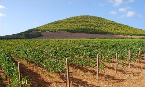 Azienda Agricola Leda' d'Ittiri: Wineyard