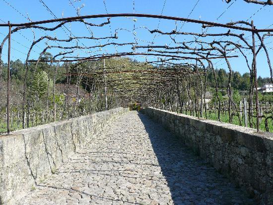 Quinta da Bouca d'Arques: Driveway to Bouca d'Arques