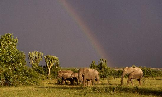 ‪‪Mweya Safari Lodge‬: Elephnats beneath a rainbow‬