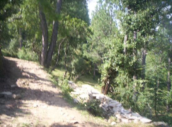 Himalayan Village Sonapani: A section of the path leading to the resort