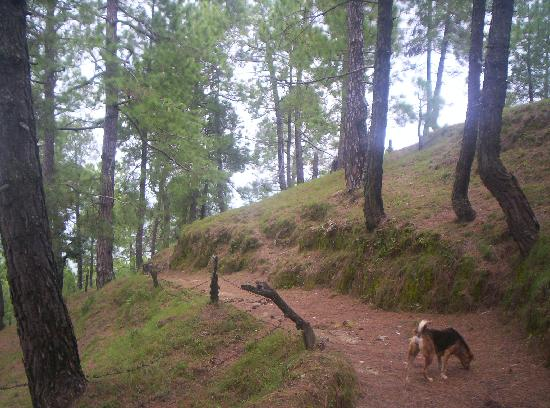 Himalayan Village Sonapani: One of the many paths around the estate