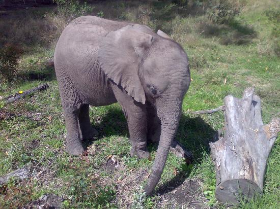 Knysna, South Africa: My special little ellie