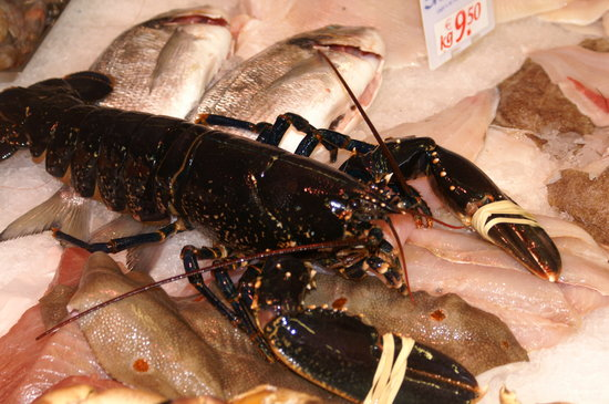 The Fish Kitchen : Fresh Lobster Available