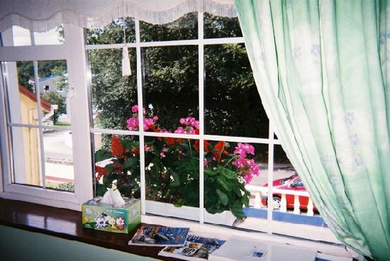 Larkfield House : The flower box looking out of the window in my room