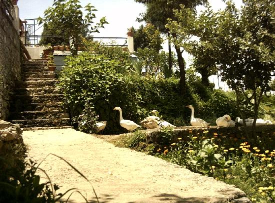Chamba, India: Geese on the property