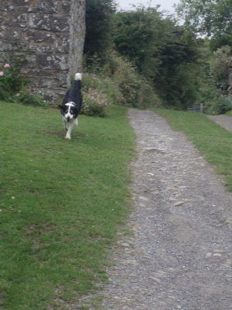 Cwm Connell Coastal Cottages: If Carlsberg made dogs..... Madra- the friendliest, most well behaved dog in the world!