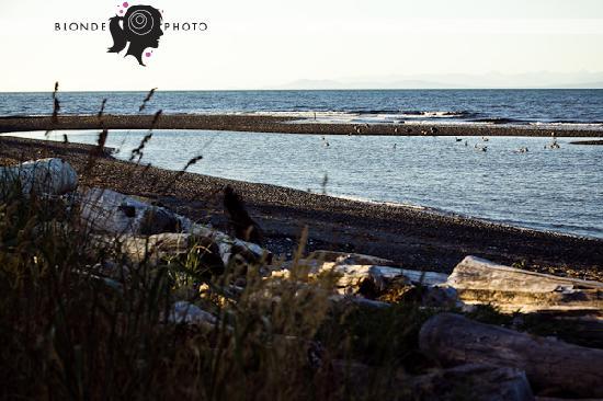 Buena Vista by the Sea: beach view