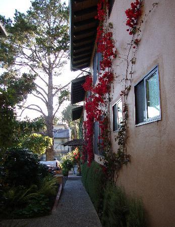 Wayside Inn: Waysdie Inn-bouganvilla