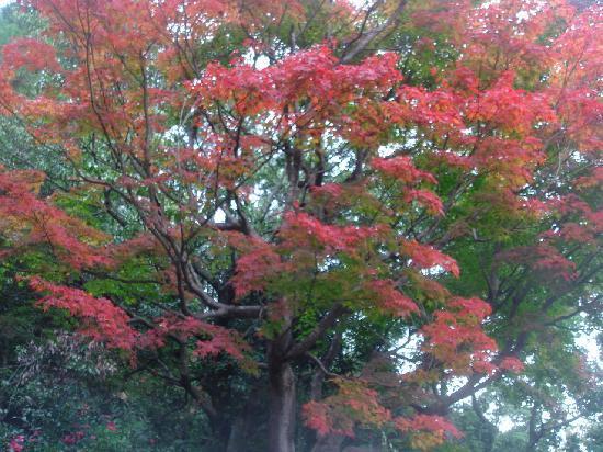 Fukuoka, Japan: 油山の紅葉