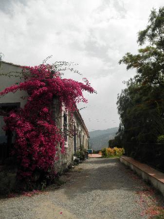 Castiglione di Sicilia, อิตาลี: Jardin