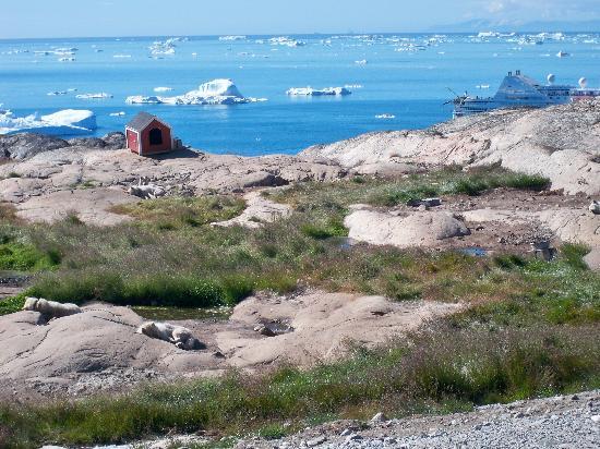 Hotel Arctic Ilulissat: Doggies beside hotel