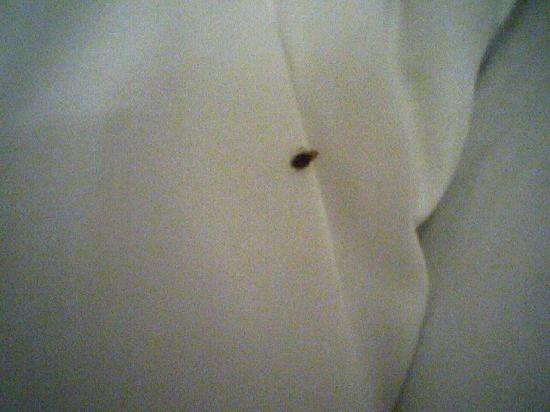 Painesville, OH: Sleep Tight! Don't let the bed bugs bite!