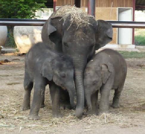 Elephantstay: Bewertungen & Fotos (Ayutthaya, Thailand)