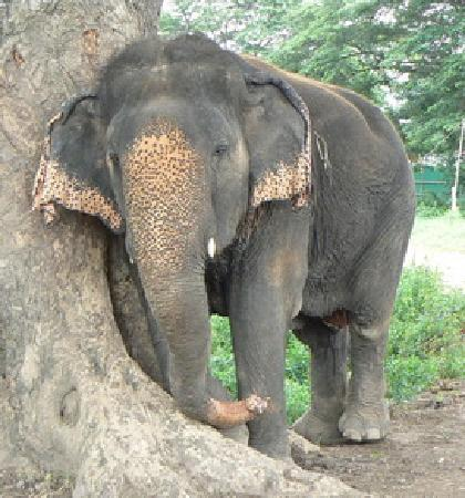Elephantstay (아유타야) - 호텔 리뷰
