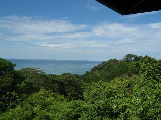 TikiVillas Rainforest Lodge & Spa : The view from our room