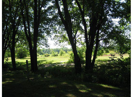 Eastern Slope Camping Area: View from site 19