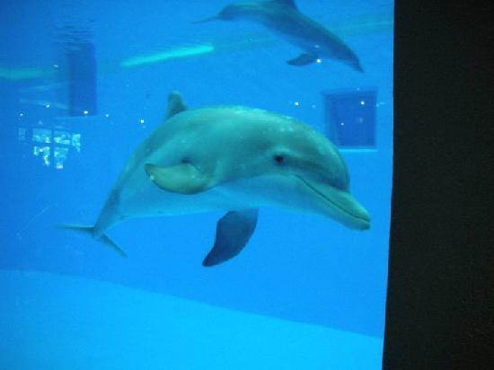 Brookfield, IL: This dolphin's name is Allison