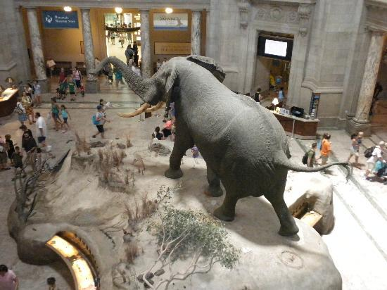 Washington DC, DC: Natural History Museum Rotunda