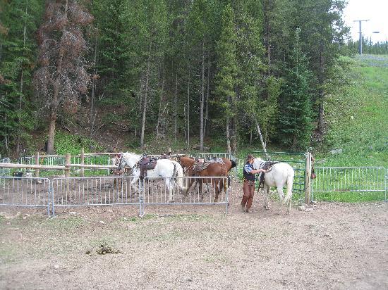 New Village: horses