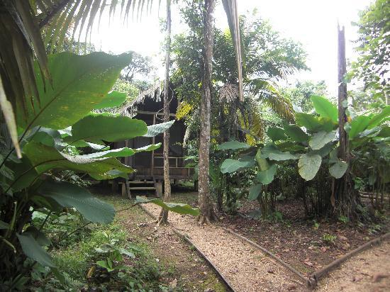 Huaorani Ecolodge: My cabin...