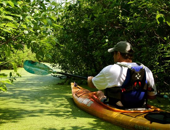 Shawnee Adventure Guides: Cache River Kayak Adventure