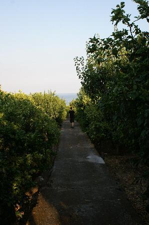 Acireale, Italy: Strolling amongst the lemon trees at Il Limoneto