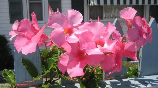Beacon House Bed and Breakfast: Beautiful Flowers