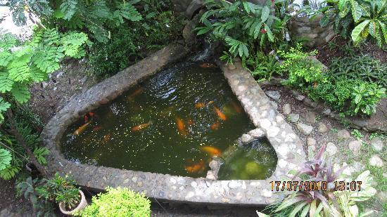 Enchanted Waters Tobago: Fish pond