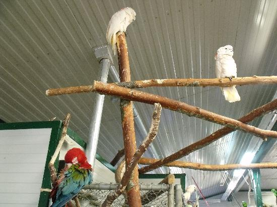 World Parrot Refuge: the free fly room