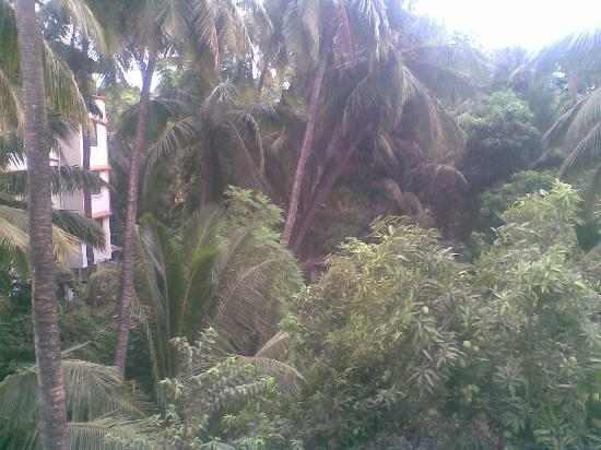 Sun 'n' Sand Holiday Home: Trees outside hotel
