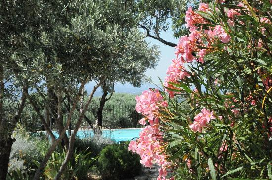 Mas de la Beaume: view from room to pool