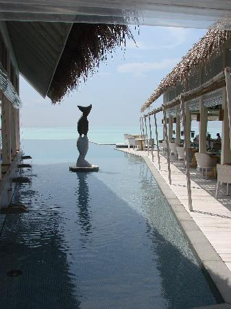 Four Seasons Resort Maldives at Landaa Giraavaru: La piscina entra nel ristorante Italiano