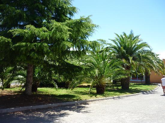 Parc Saint James Oasis Village : végétations dans le camping