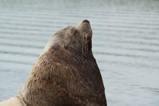 Kodiak Island, AK: sea lion