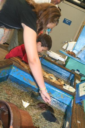 Woods Hole Science Aquarium: Touch tanks