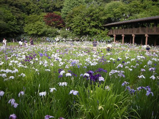 Hondo-ji Temple: 菖蒲