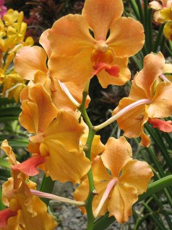 Deshaies, Guadeloupe: jardin botanique