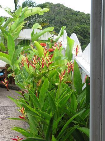 Tropic's Cafe : Garden