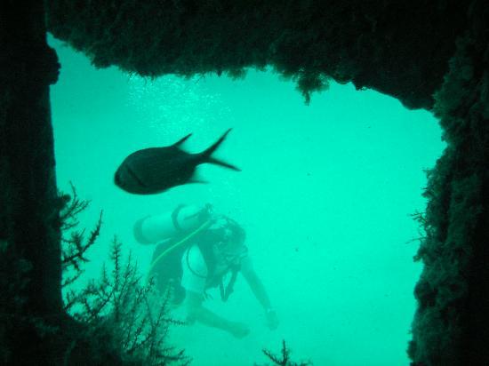 Ocean Explorers Dive Center: Passing thru the wheelhouse of the Porpoise tug