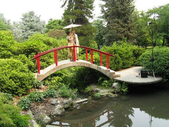 moon bridge picture of kubota garden seattle tripadvisor - Kubota Garden