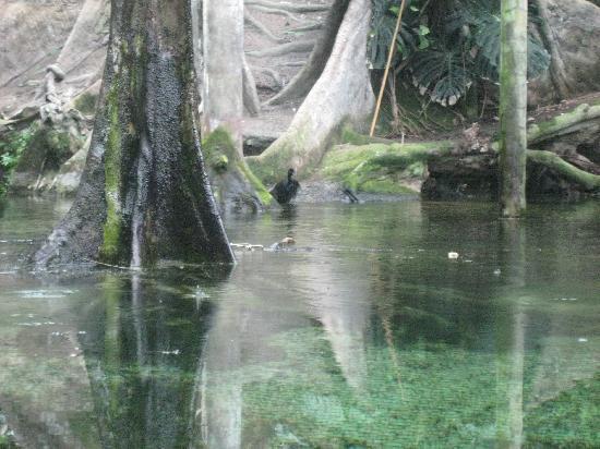 CosmoCaixa Barcelona : la foresta pluviale