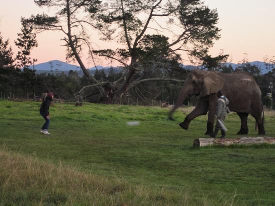 Knysna Elephant Park Lodge: playing soccer - morning workout