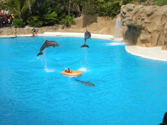 Fanabe, Spain: dolphin show at Loro Parque