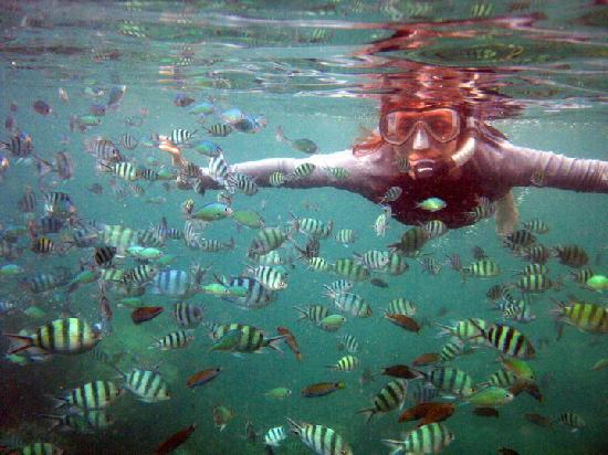Karimun Jawa, Indonesia: many colorful cute fish