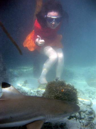 Karimun Jawa, Indonesia: swimming with the sharks