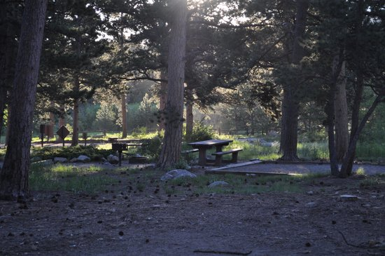 Olive Ridge Campground : campsite